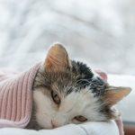 猫の尿路結石